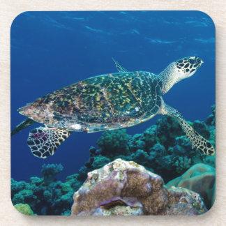 Hawksbill Sea Turtle Great Barrier Reef Coral Sea Coaster