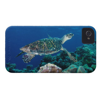 Hawksbill Sea Turtle Great Barrier Reef Coral Sea iPhone 4 Cases