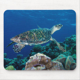 Hawksbill Sea Turtle Great Barrier Reef Coral Sea Mouse Pad