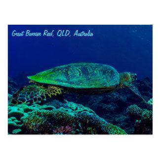 Hawksbill Sea Turtle Great Barrier Reef Coral Sea Postcard