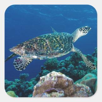 Hawksbill Sea Turtle Great Barrier Reef Coral Sea Square Sticker