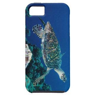 Hawksbill Sea Turtle iPhone 5 Case