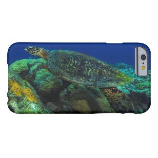Hawksbill Sea Turtle iPhone 6 Case
