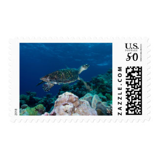 Hawksbill Sea Turtle on the Great Barrier Reef Postage