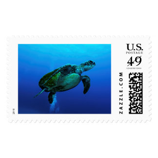 Hawksbill Sea Turtle Postage Stamps