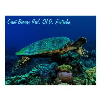 Hawksbill Sea Turtle Postcard