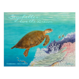 Hawksbill Sea Turtle Postcard