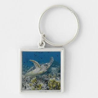 Hawksbill Sea Turtle Swimming Keychain