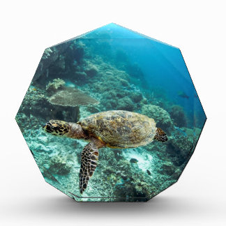 Hawksbill sea turtle underwater Raja Ampat islands Acrylic Award