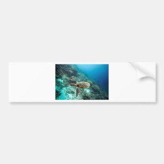 Hawksbill sea turtle underwater Raja Ampat islands Bumper Sticker