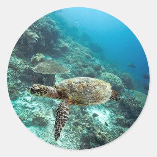 Hawksbill sea turtle underwater Raja Ampat islands Classic Round Sticker