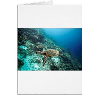 Hawksbill sea turtle underwater Raja Ampat islands Greeting Card