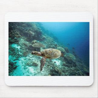 Hawksbill sea turtle underwater Raja Ampat islands Mouse Pad