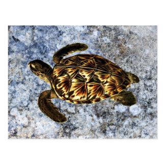 Hawksbill Sea Turtle Vintage Illustration Postcard