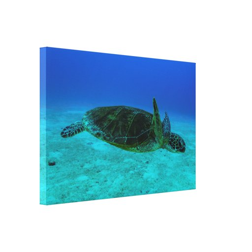 Hawksbill Sea Turtle Wrapped Canvas Canvas Print