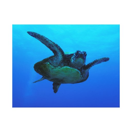 Hawksbill Sea Turtle Wrapped Canvas Stretched Canvas Prints