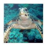 Hawksbill Turtle Ceramic Tiles
