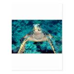 Hawksbill Turtle Postcard