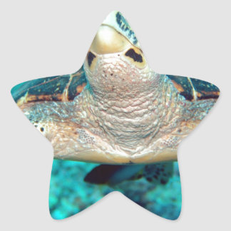 Hawksbill Turtle Star Sticker