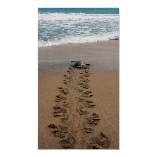 Hawksbill Turtle Trek print