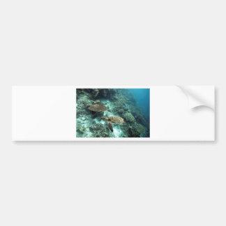 Hawksbill turtle underwater Raja Ampat islands Bumper Sticker