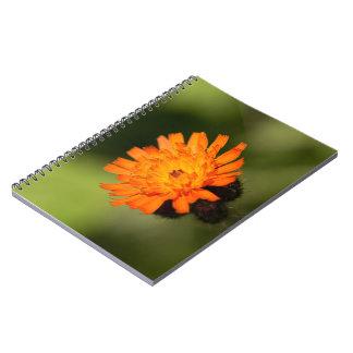 Hawkweed anaranjado libretas espirales