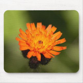 Hawkweed anaranjado mousepads