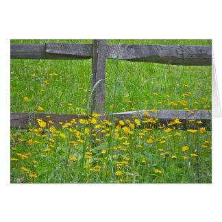 Hawkweed at Split Rail Fence Matching Items Card