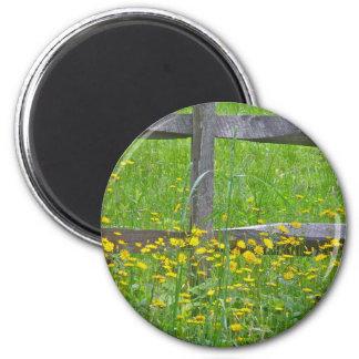 Hawkweed at Split Rail Fence Matching Items Refrigerator Magnets