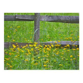 Hawkweed at Split Rail Fence Matching Items Postcard