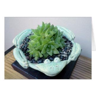 Haworthia en la tarjeta de Froggie por la planta