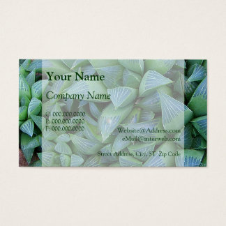 Haworthia Succulent Plant Business Cards