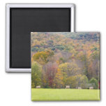 Hay bales and fall foliage, on a farm in 2 inch square magnet
