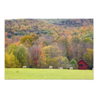 Hay bales and fall foliage, on a farm in photo print