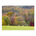 Hay bales and fall foliage, on a farm in post cards