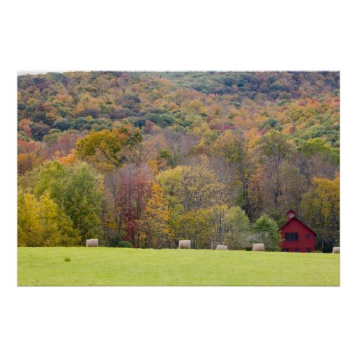 Hay bales and fall foliage, on a farm in print