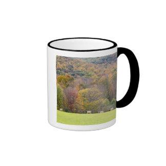 Hay bales and fall foliage, on a farm in ringer mug