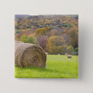 Hay bales and fall foliage on farm, button