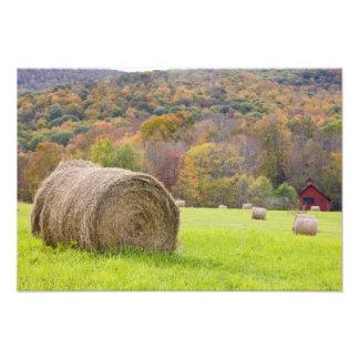 Hay bales and fall foliage on farm, photo print