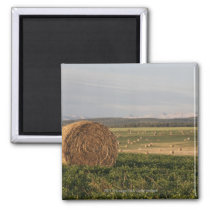 Hay Bales In A Field With Mountains At Sunrise Magnet