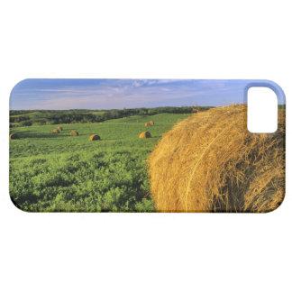 Hay Bales near Bottineau North Dakota iPhone SE/5/5s Case