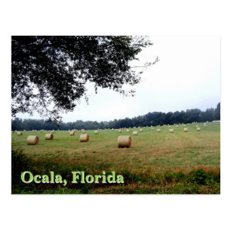 Hay Bales of Ocala, Florida green meadow postcard