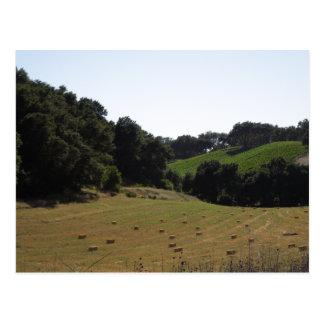 Hay Field Below Vineyard in Paso Robles Postcard