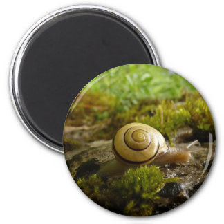 hay for snail day! 2 inch round magnet