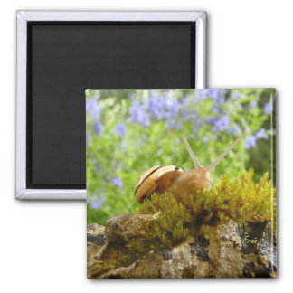 hay for snail day! 2 inch square magnet