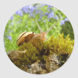 hay for snail day! classic round sticker