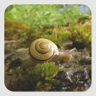 hay for snail day! square sticker