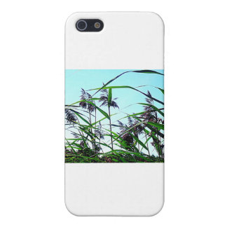 Hay in the summer case for iPhone SE/5/5s