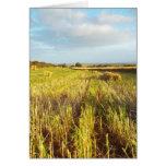 hay! spring harvest greeting card