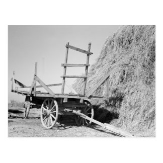 Hay stack and wagon – 1939. post cards